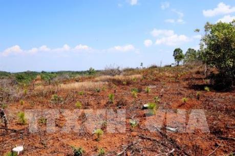 Vụ mất hơn 1.470 ha rừng ở Gia Lai: Chuyển hồ sơ sang cơ quan điều tra