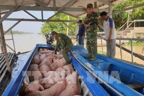 Bắt giữ vụ vận chuyển trái phép hơn 3,7 tấn lợn từ Campuchia về Việt Nam