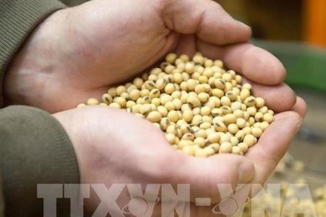 Trung Quốc tiếp tục mua đậu tương Mỹ dù thiếu kho chứa