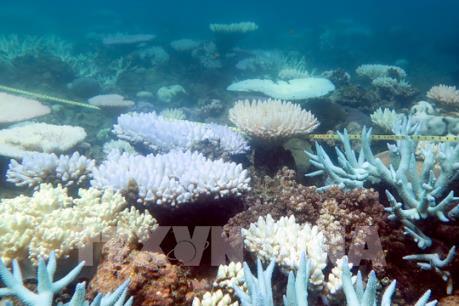 Rạn san hô lớn nhất thế giới Great Barrier vào mùa sinh sản