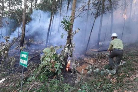 Diễn tập chữa cháy rừng cấp quốc gia năm 2019