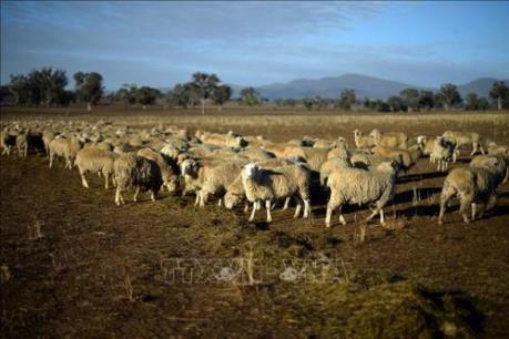 Biến đổi khí hậu và suy thoái kinh tế - hai thách thức lớn đối với Australia