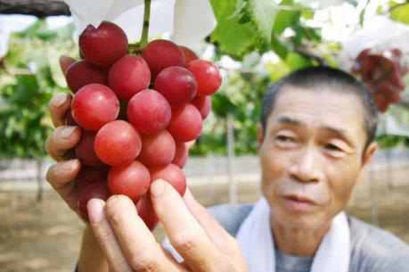 Nhật tăng cường bảo vệ quyền sở hữu trí tuệ cho các nông sản mới