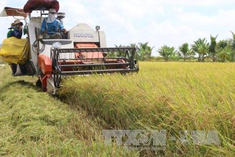 Thị trường nông sản tuần qua: Giá lúa ổn định, giá cà phê phục hồi