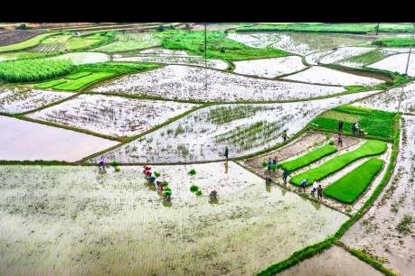 Các tỉnh Nam bộ quản lý dịch hại trên trà lúa Đông Xuân