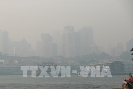 Australia: Nguy cơ ô nhiễm nguồn nước từ tàn tro do cháy rừng