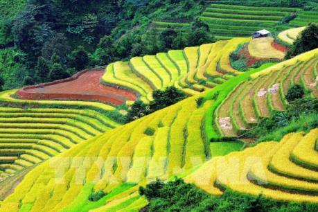 Ruộng bậc thang tại huyện Bắc Yên