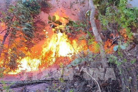 Cháy rừng tại thành phố Phúc Yên, Vĩnh Phúc