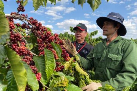 Giá cà phê tiếp tục đà tăng