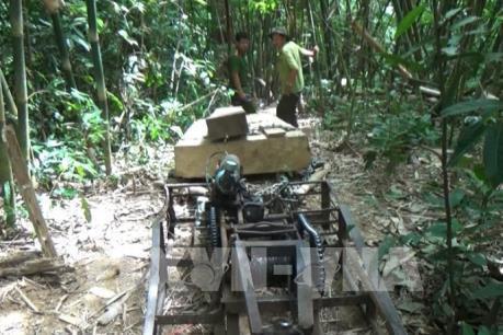 Đóng cửa rừng tự nhiên: Bài 2 - Vẫn xảy ra phá rừng, khai thác rừng trái pháp luật