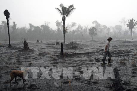 Diện tích rừng Amazon bị tàn phá tăng kỷ lục