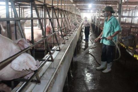 Giải pháp giúp sản phẩm chăn nuôi cạnh tranh được về giá?