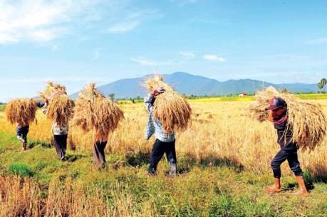 Mỹ có thể đầu tư lớn vào ngành nông nghiệp Campuchia