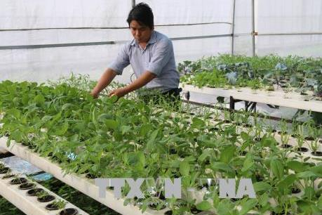 Hậu Giang ưu đãi thu hút đầu tư vào nông nghiệp công nghệ cao