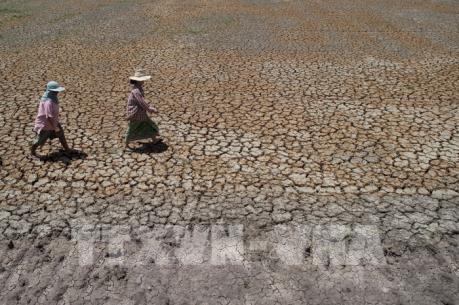 Giá nông sản Thái Lan dự báo sẽ tăng cao do hạn hán nghiêm trọng