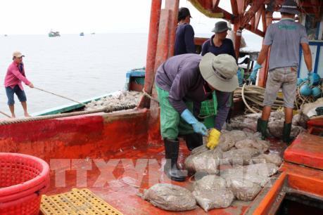 """Khắc phục """"thẻ vàng"""" IUU: Việt Nam quyết tâm chống khai thác hải sản bất hợp pháp"""