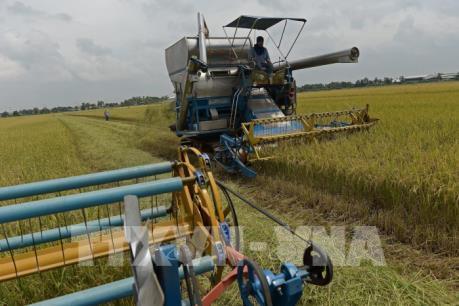 Xuất khẩu gạo của Campuchia sang Trung Quốc tăng 46%