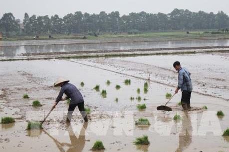 Ứng phó với bất lợi do thời tiết gây ra trong sản xuất vụ Xuân 2020
