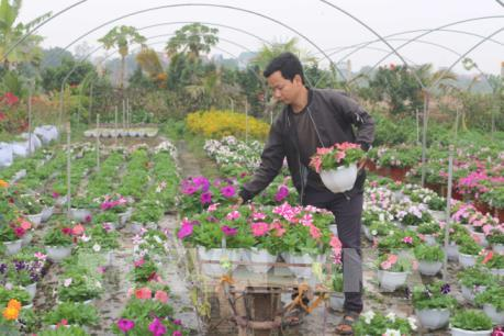 Các nhà vườn tất bật cho vụ hoa Tết