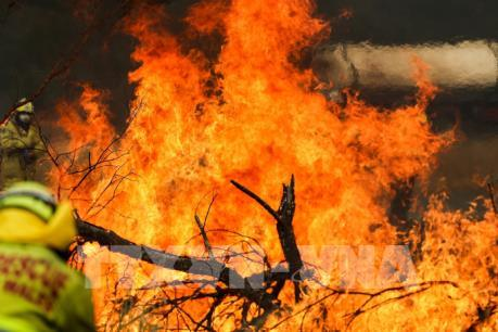 Australia ban bố tình trạng khẩn cấp tại vùng lãnh thổ thủ đô do cháy rừng
