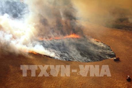 Australia: Cháy rừng gây tổn thất nặng cho nền kinh tế