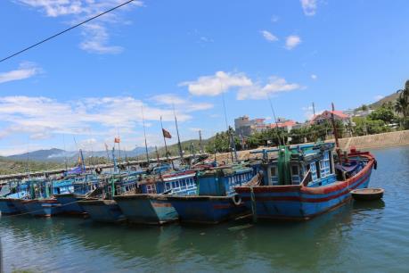 Kỷ luật Giám đốc Ban quản lý Cảng cá và Khu neo đậu tránh bão cho tàu cá Bạc Liêu