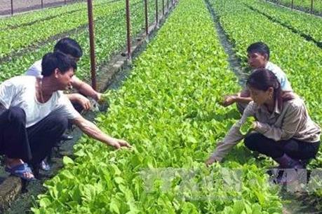 Doanh nghiệp Nhật Bản muốn đầu tư nông nghiệp công nghệ cao ở Bạc Liêu