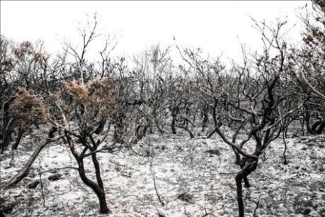 """Định lượng """"được"""" và """"mất"""" của kinh tế Australia sau thảm họa cháy rừng lịch sử (Phần 2)"""