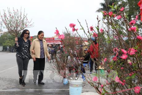 Hà Nội: Thị trường đào, quất nhộn nhịp đón Tết Canh Tý 2020