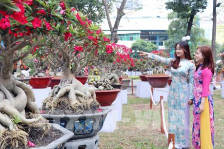 Rực rỡ sắc màu Hội hoa Xuân Thành phố Hồ Chí Minh Canh Tý 2020