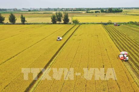 Nhiều tín hiệu khởi sắc cho thị trường lúa gạo