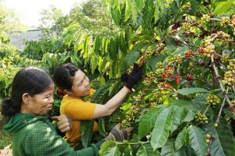 Quảng bá cà phê Việt Nam ra thế giới