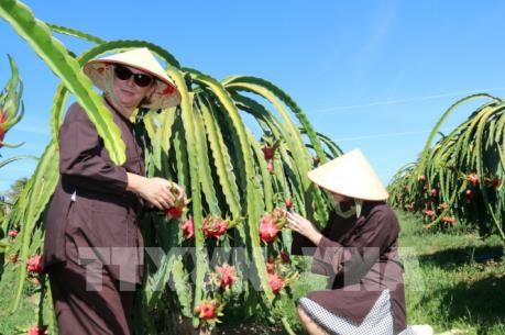 Phát triển sản phẩm du lịch gắn với nông nghiệp bền vững