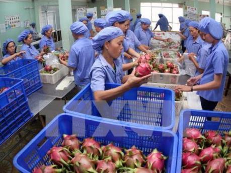 Bộ Công Thương khuyến cáo và đưa ra giải pháp hỗ trợ xuất khẩu nông sản