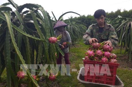 Dịch do virus Corona: Nông sản vượt rào cản dịch