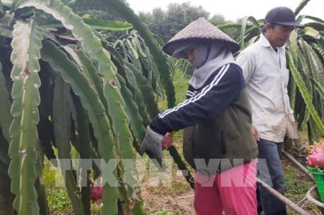 Dịch do virus Corona: Tìm giải pháp tiêu thụ trái cây