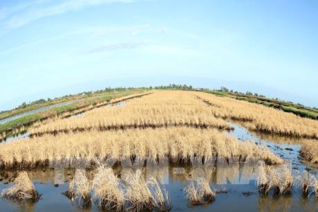 Xâm nhập mặn ở Đồng bằng sông Cửu Long vẫn ở mức cao