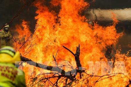 Australia sẽ sản xuất rượu vang có vị khói sau mùa cháy rừng