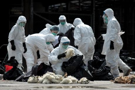 Trung Quốc xác nhận ổ dịch cúm gia cầm H5N6 đầu tiên ở Tứ Xuyên
