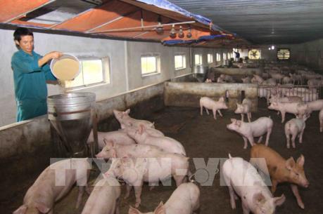 Việt Nam và Hoa Kỳ hợp tác nghiên cứu vắc xin dịch tả lợn châu Phi