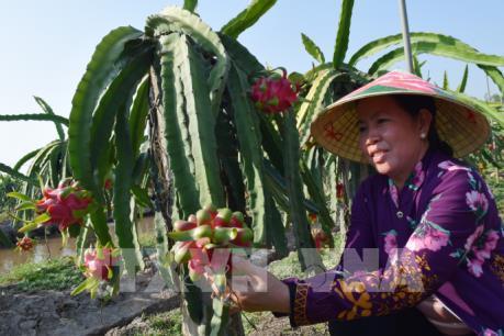 Nhật Bản hỗ trợ Đồng Tháp 55.000 USD phát triển nông nghiệp hữu cơ
