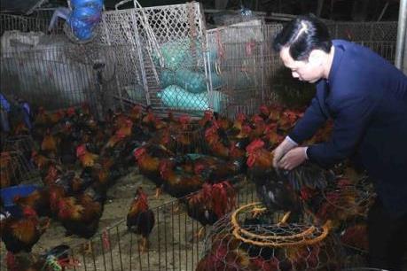 Tăng mức xử phạt vi phạm trong lĩnh vực thú y