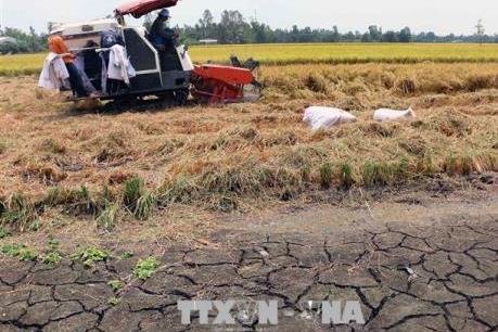 Hạn, mặn ảnh hưởng nghiêm trọng đến nông nghiệp và dân sinh