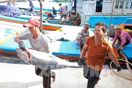 Xử lý triệt để các trường hợp khai thác hải sản trái phép