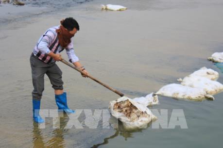 Gia cầm chết vứt ngổn ngang tại đập Lip, Thái Nguyên