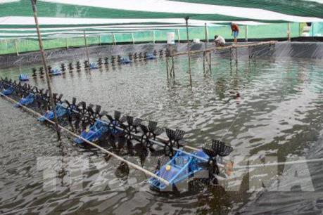 Khánh Hòa thả nuôi hơn 600ha tôm nước lợ vụ đầu năm