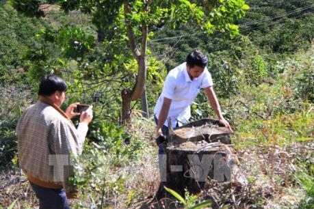 """Lâm Đồng: Phi Liêng """"nóng"""" tình trạng phá và rao bán đất rừng"""