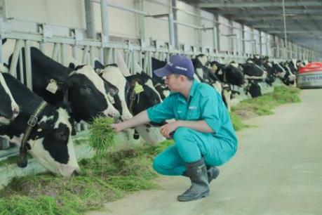 Thêm một nhà máy sản xuất sữa của Việt Nam đủ điều kiện xuất khẩu vào  Trung Quốc