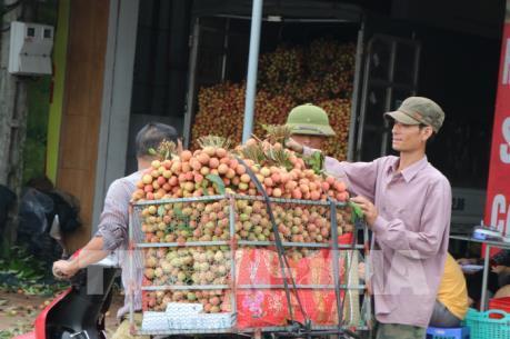 Xây dựng vùng trồng vải đủ tiêu chuẩn xuất khẩu EU