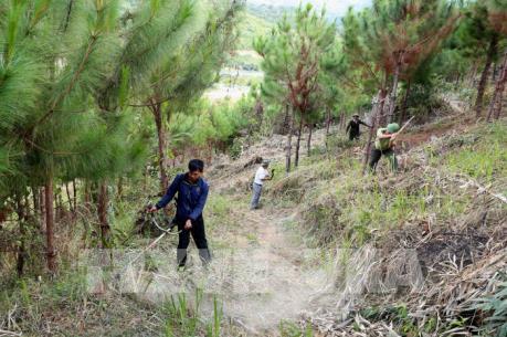Nhiều biện pháp cấp bách phòng cháy, chữa cháy rừng